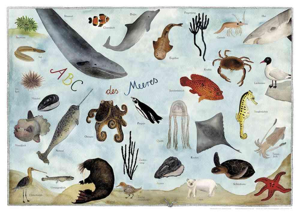 6471901e008c3d Meerestiere ABC Poster im Kinderpostershop für Kinderzimmer Deko