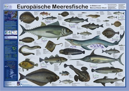 European sea fish