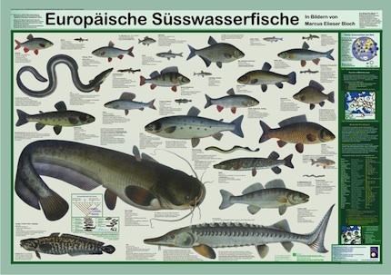 European freshwater fishes