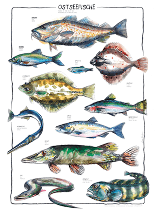 Fishes of the Baltic Sea