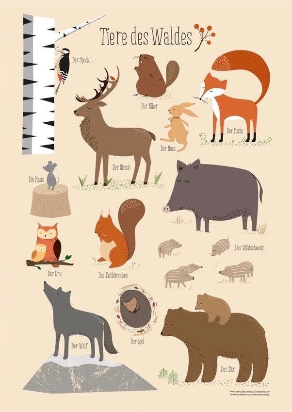 Tiere des Waldes - Poster für Kinderzimmer Deko im Kinderpostershop