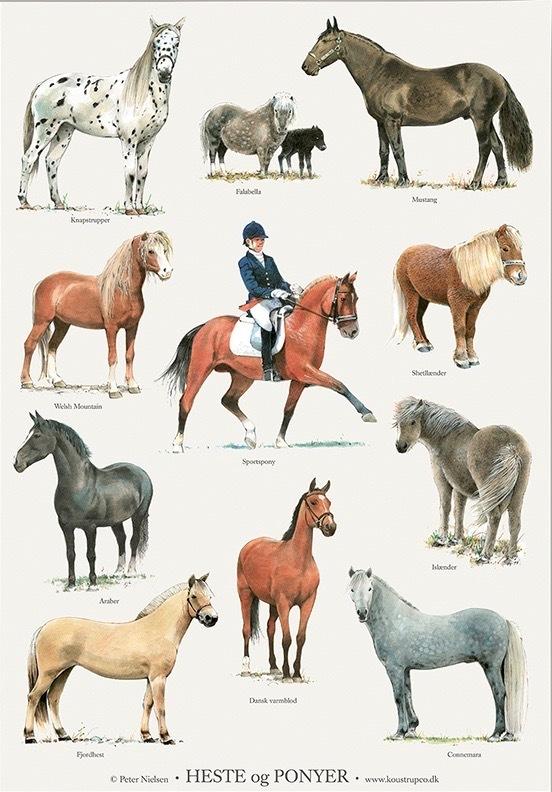 Pferde und Ponys - kleines Poster für Kinderzimmer | Kinderpostershop
