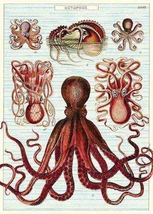 OCTOPODS