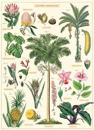 Pflanzen Und Früchte Poster Schöne Auswahl Bei Kinderpostershopde